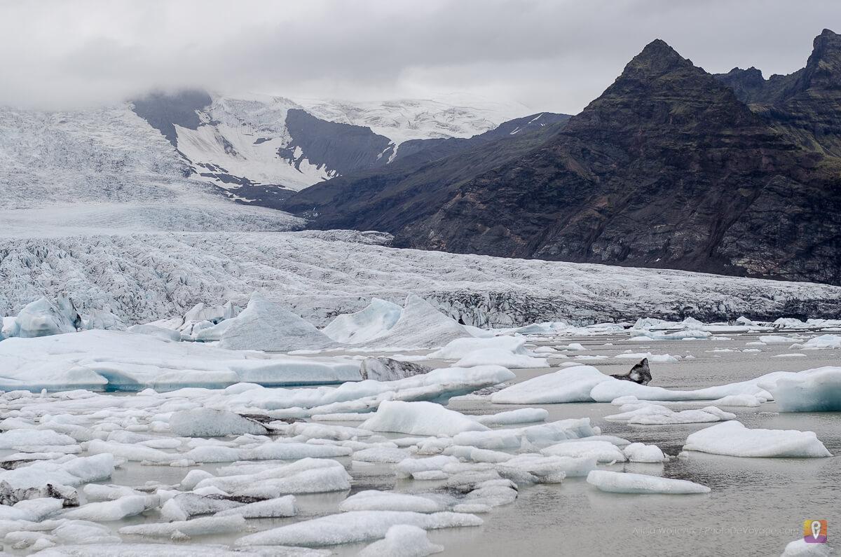 Fjallsárlón Glacial Lagoon lodowiec w Islandii