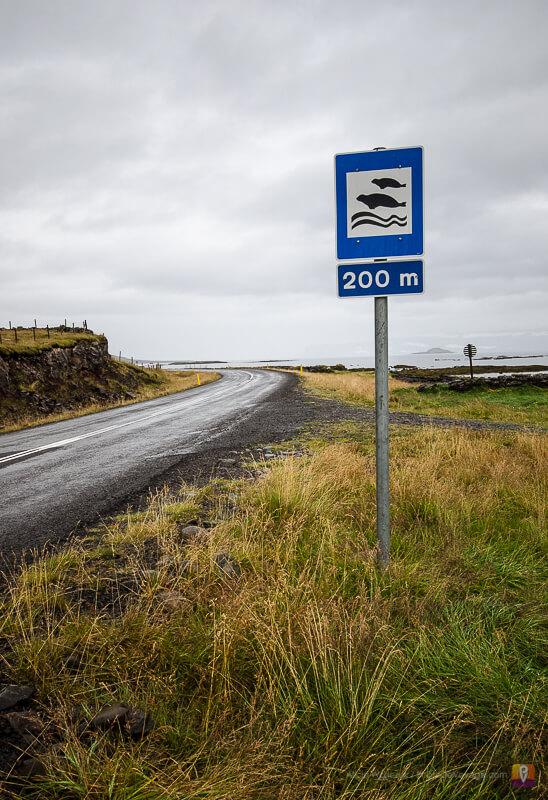 Westfjords znak drogowy uwaga foki