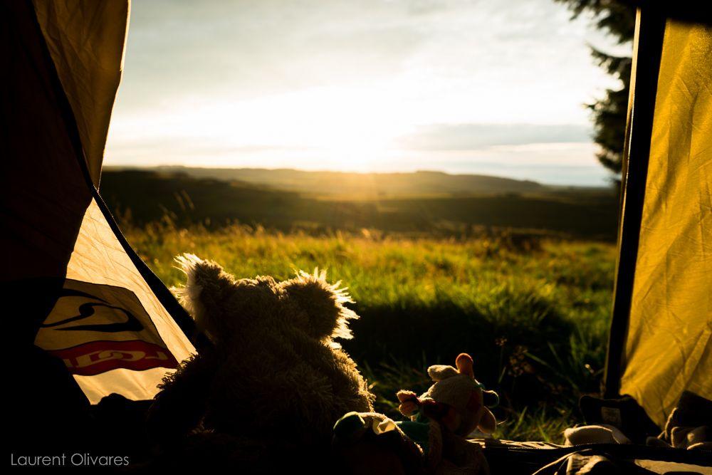 Koala et Girafe qui profite du couché de soleil